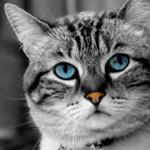 Аватар пользователя Lara
