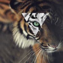 Аватар пользователя Igori