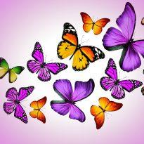 Аватар пользователя LudmilaSergeevna