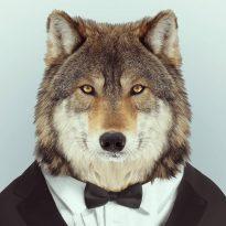 Аватар пользователя Wulf